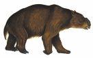 Diprotodon optatum - the Giant Wombat