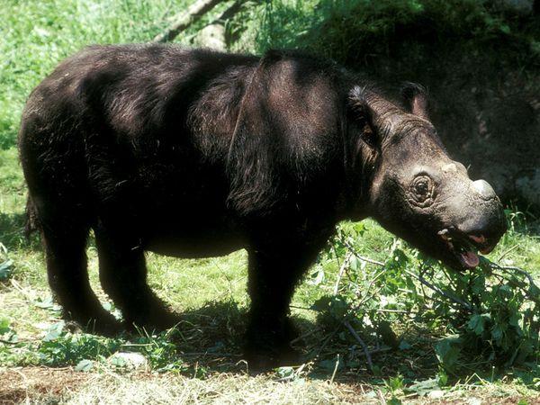 See? Fuzzy rhino.